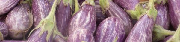 eggplant header